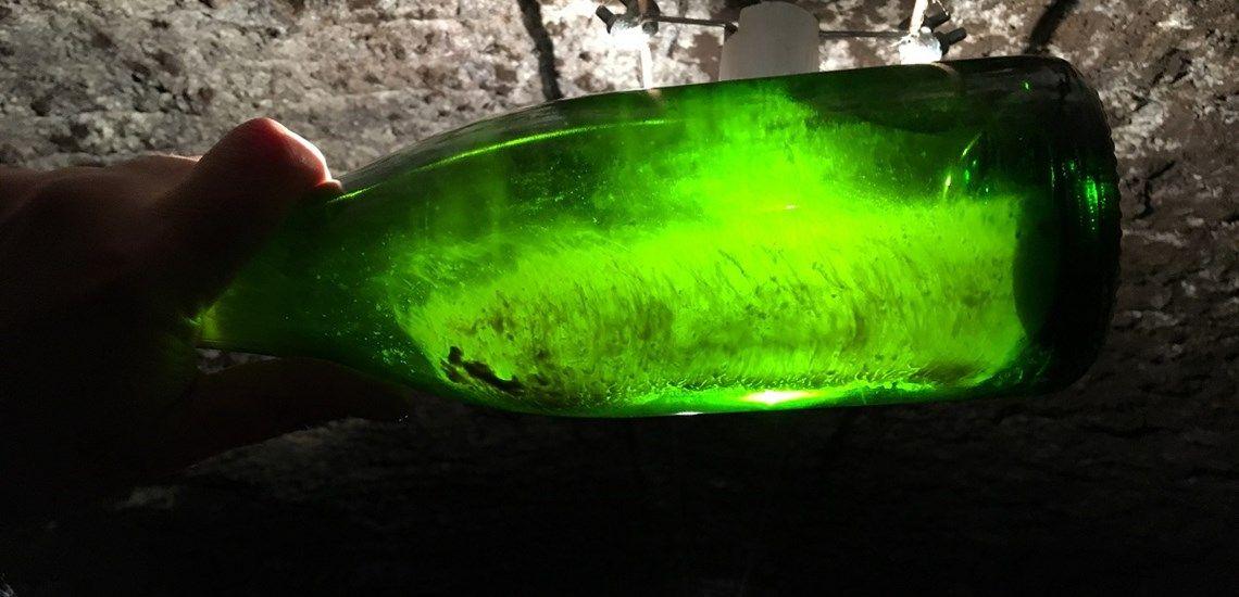 CAVA ужесточают правила производства органических вин