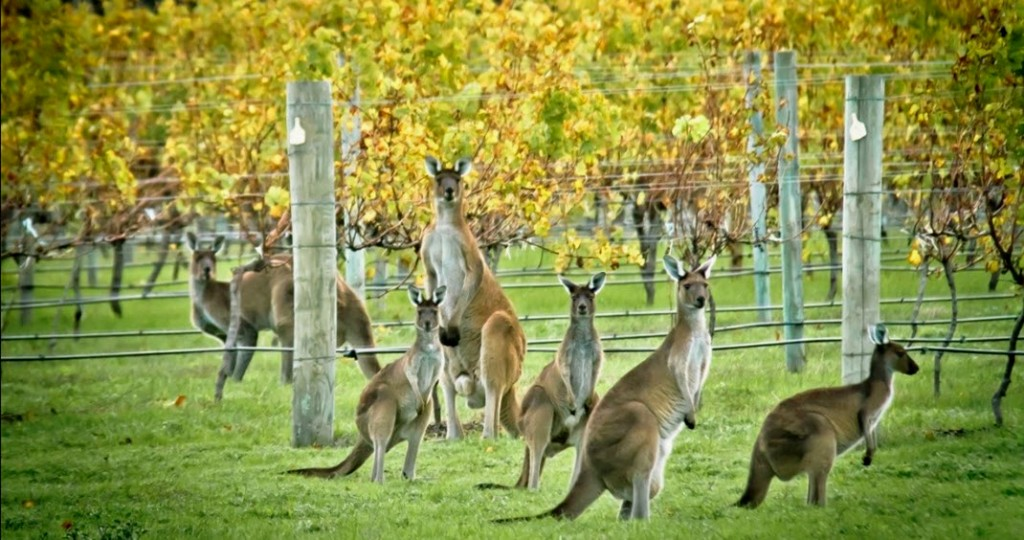 Export value of Australian wine increases by 7% to reach $2bn